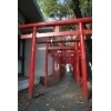 Torii