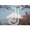 Mt. Fuji & Japanese plum